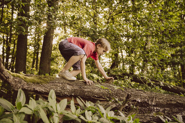 Boy climbing along fallen tree in forest - MFF001922