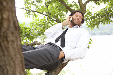 Germany, relaxed businessman lying in tree telephoning - MFRF000264