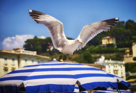 Italy, Liguria, Sestri Levante, seagull on sunshade - DIKF000159