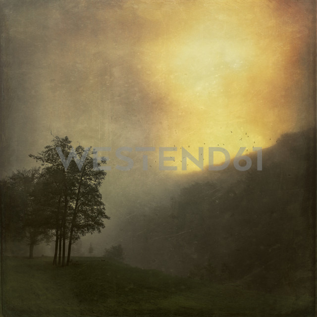 Landscape at sunrise in the fog, textured effect - DWIF000547