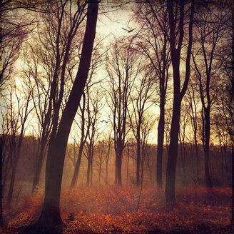 Autum forest at sunrise, digitally manipulated - DWIF000550