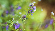 Summery flower bed, blossoms, blurry background - LSF000065