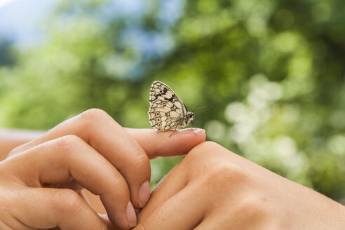 Butterfly on woman's hand - TCF004774
