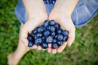Little girl's hands holding blueberries - LVF003749