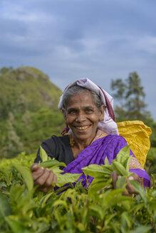 Sri Lanka, Smiling woman plucking tea - TOVF000011