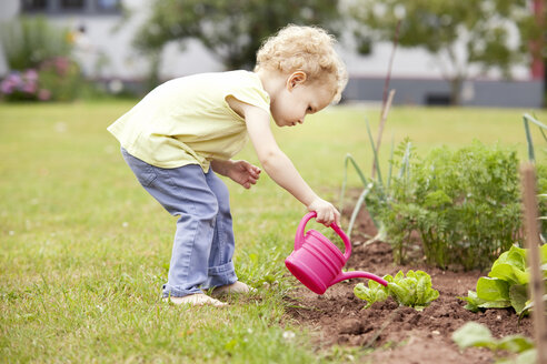 Little girl standing in the garden watering lettuce - MFRF000320