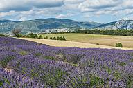 France, Alpes-de-Haute-Provence, Landscape, lavender field and mountain - KEBF000222
