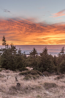 Germany, Saxony-Anhalt, Harz National Park, atmospheric inversion at Brocken in the morning - PVCF000497