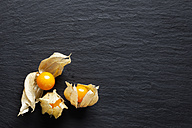 Three Physalis on slate - CSF025965