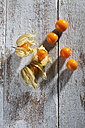 Physalis on wood - CSF025970