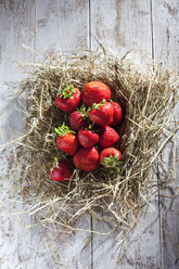 Strawberries on a nest - CSF025971