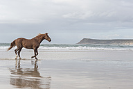 Brown horse on a beach - ZEF006432
