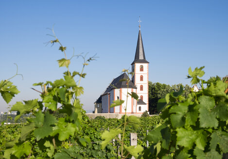 Germany, Hesse, Hochheim am Main, Vineyards and Church of Saint Peter and Paul - SIEF006685