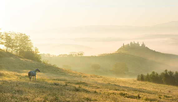 Italy, Tuscany, San Quirico d'Orcia, view to rolling landscape in the morning mist - LOMF000041