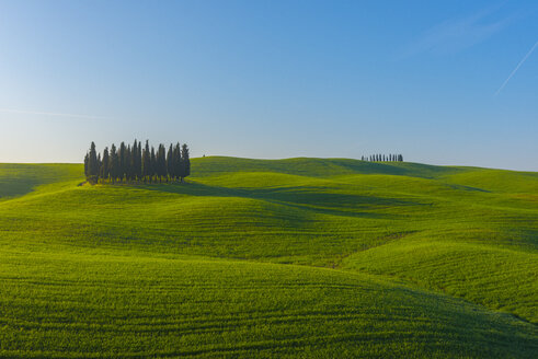 Italy, Tuscany, Val d'Orcia, view to rolling landscape with cypresses - LOMF000033