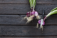 Bunch of red spring onions and kitchen knife on dark wood - CSF026165