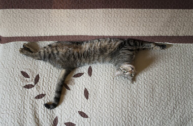 Tabby cat stretching and resting on bed at home - RAEF000294
