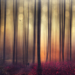 Autum forest, man and flying birds, digitally manipulated - DWI000566