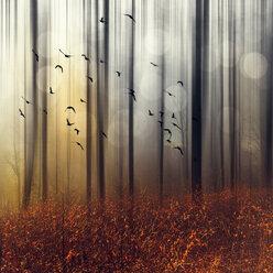 Flock of birds in autumn forest, digitally manipulated - DWI000563