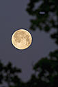 Germany, full moon in the morning - UMF000786