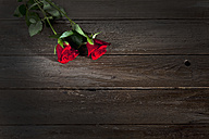 Two red roses on wood, copy space - CSF026264