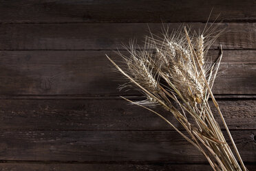 Barley, Hordeum vulgare, and rye, Secale cereale, on wood - CSF026270