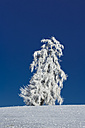 Germany, Bavaria, tree in winter - MAEF010979