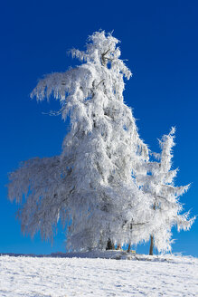 Germany, Bavaria, trees in winter - MAEF010978
