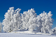 Germany, Bavaria, trees in winter - MAEF010976