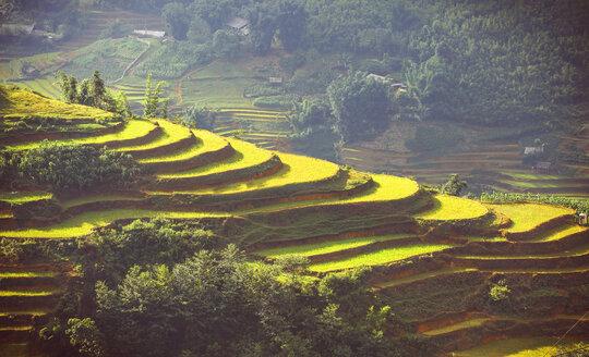 Vietnam, Sa Pa, terraced fields - EHF000179