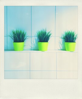 Row of plants in yellow pots on tiled sill - VRF000161