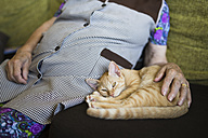 Tabby kitten lying besides old woman on the couch - RAEF000376