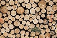 Pile of logs - ASCF000340