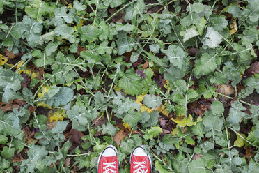 Photographer's shoes on rape field - ASCF000347
