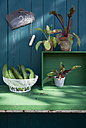 Cucumbers in wire basket and mangold, slate with chalk - GISF000147