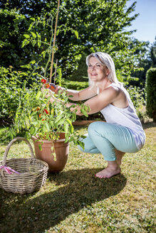 Smiling mature woman with tomato plant in garden - RKNF000314