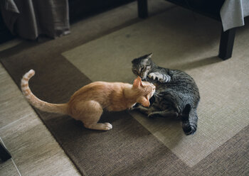 Two tabby cats play fighting in appartment - RAEF000442