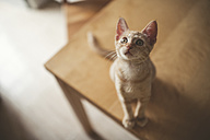Tabby kitten sitting on a table looking up - RAEF000436