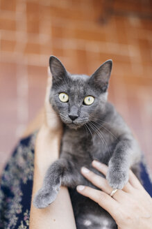 Russian blue lying in the lap of woman - GEMF000347
