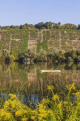 Germany, Stuttgart, woman kayaking on Neckar in front of vineyards - WDF003244