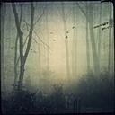 Forest in mist, flying birds - DWIF000597
