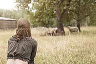 Woman looking at flock of sheep on organic farm - MIDF000605