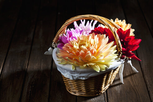 Colourful dahlia, blossoms in basket on wood - CSF026289