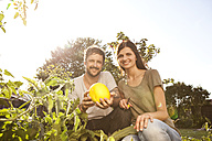 Smiling couple with yellow courgette in the garden - MFRF000439