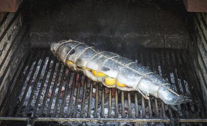 Salmon stuffed with lemons on grill - DEGF000540