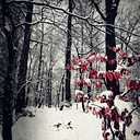 Snow-covered forest with last leaves - DWIF000606