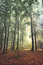 Deciduous forest in summer - DWIF000611