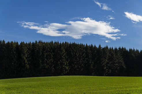 Germany, Wadlhausen, view to pine forest and meadow in the foreground - TCF004890