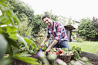 Man gardening in vegetable patch - RBF003138