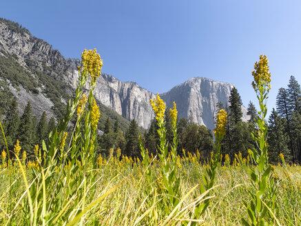 USA, California, Yosemite National Park, Sierra Nevada - SBDF002239